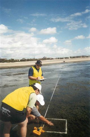 Moreton Bay Seagrass Watch team