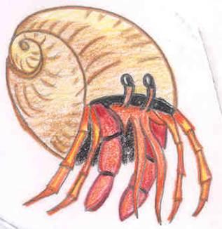 hermit crab (Kiera Price)