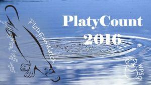 platycount